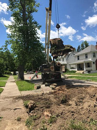 Ackermans Tree Service stump grinding and removal