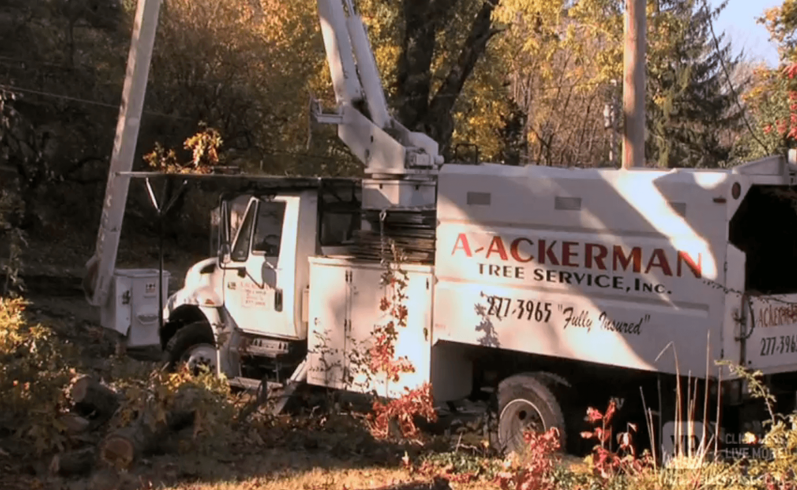 Ackerman Tree Service Bucket Trucks